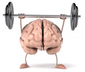 cerveau fotolia