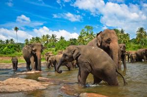 elephants petit